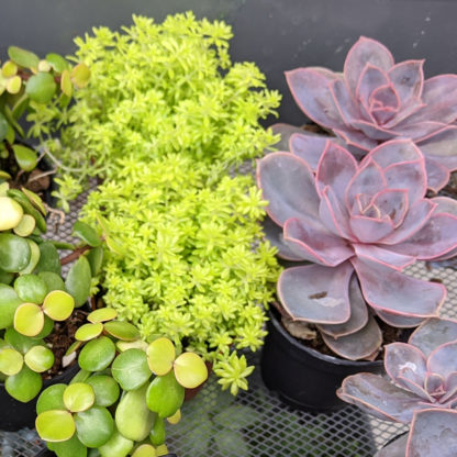 House plants Succulents