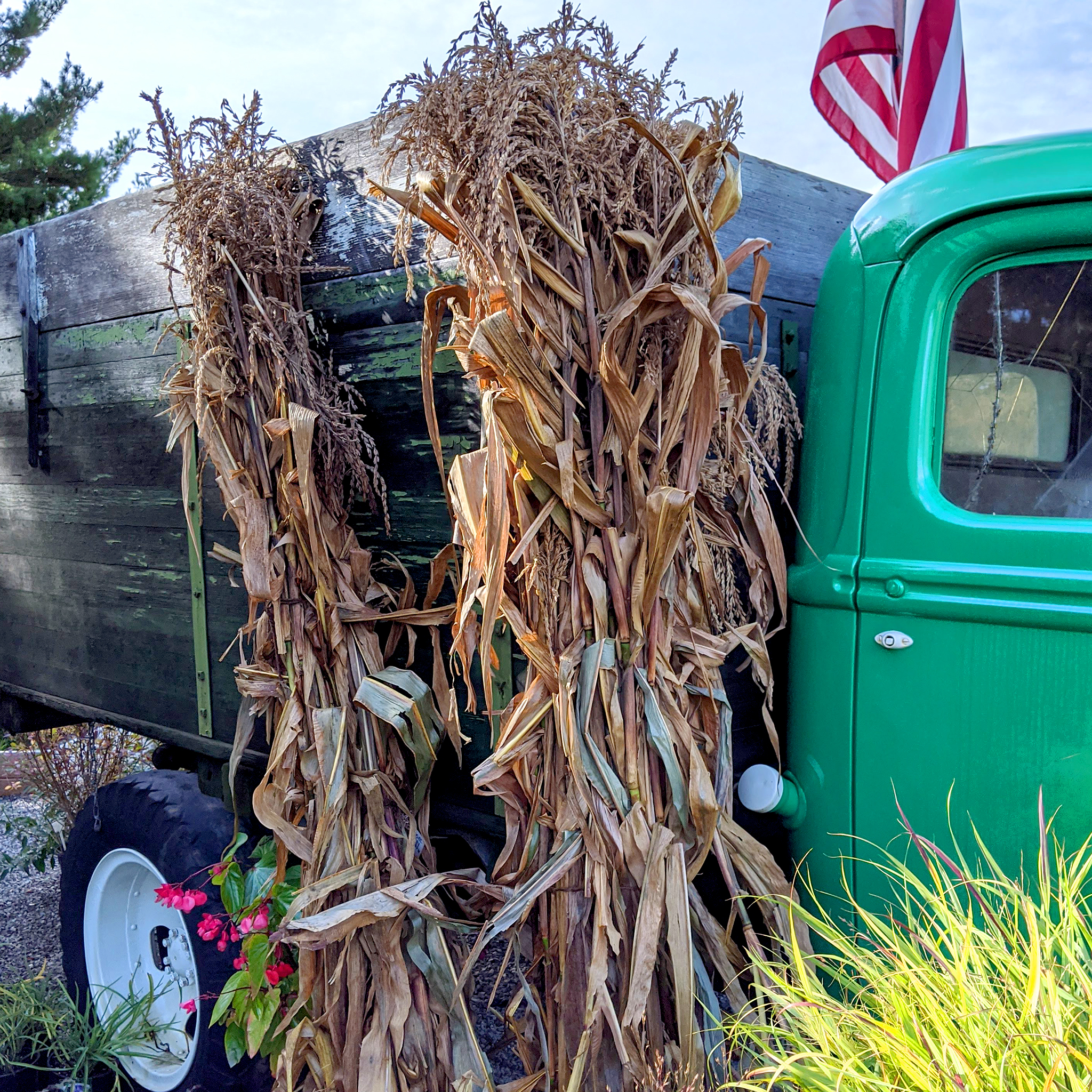 Corn Stalk Bundle Little Fox Farm Traverse City Mi #russell #lombardi's ranch #corn #corn stalks #corn maze #fall #path #boy #sky #words #text #some walks you have to take alone #mockingjay. corn stalk bundle